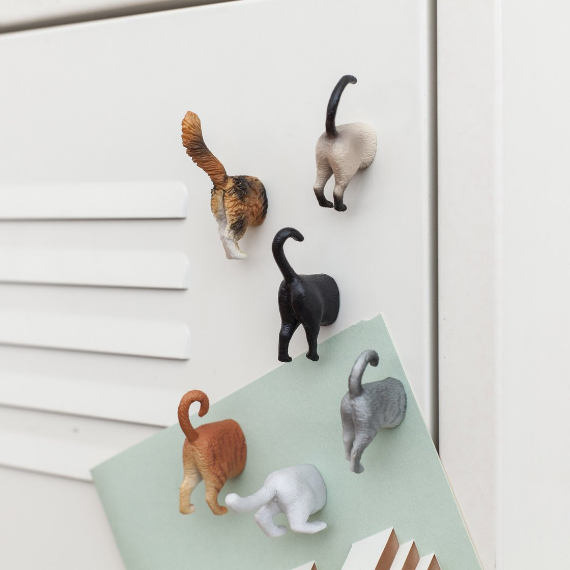 Cat Butt Magnets in action