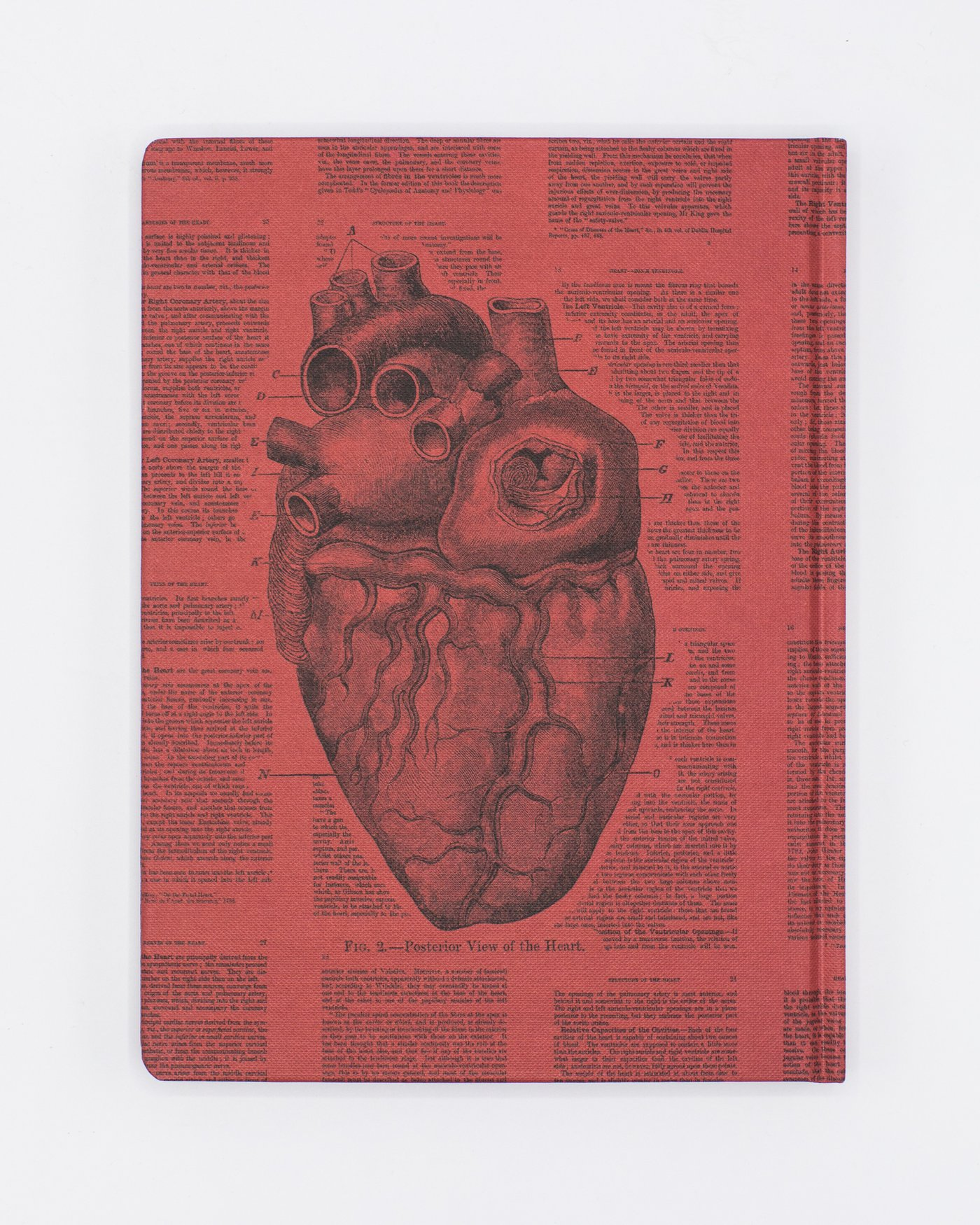 Back cover of Anatomical Heart Notebook