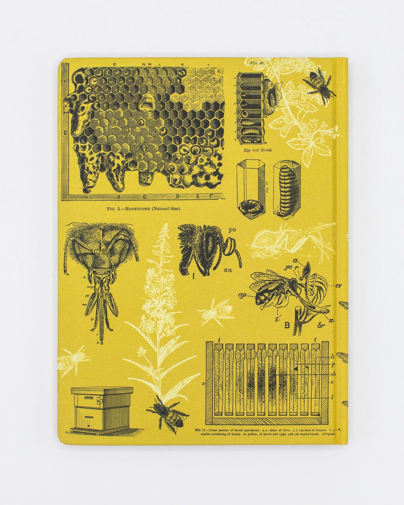 Back cover of Honey Bee Notebook