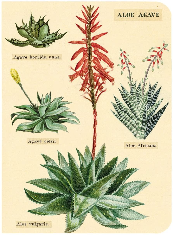 Aloe & Agave Mini Notebook included